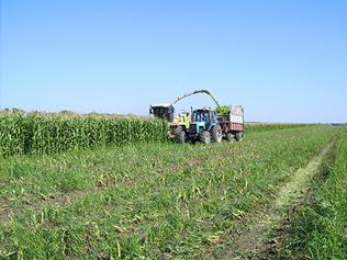 Приготовление кукурузного силоса